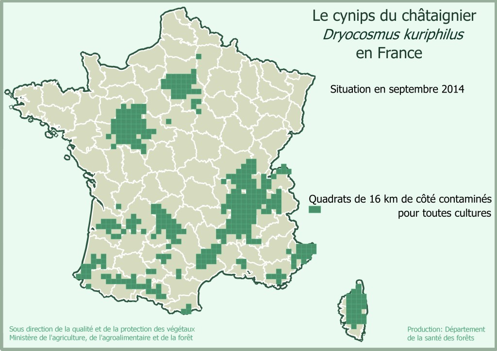 carte cynips septembre 2014